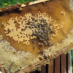 Beekeeper's view. April 2012