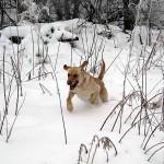 Tigger snow bounding
