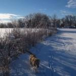 Tigger snowshoeing
