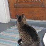 cat at ornate door