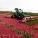 cranberry harvesting equipment