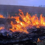 flames, prescribed fire March 2012 IL