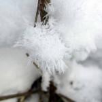 frosty plant stems Feb. 2013