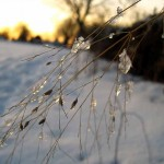 ice on switchgrass at sunset 2. Feb 2013