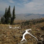 Elk sheds, smokey vista. Yellowstone NP, WY. Aug. 2012