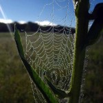 Web on Compass (vert)2. Aug 2012