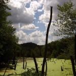 Wetland1, Effigy Mounds, IA. Jul 2012
