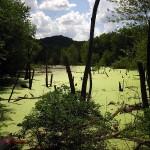 Wetland2, Effigy Mounds, IA. Jul 2012