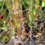 beads of dew. Aug. 2012