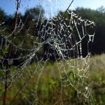 damaged spider web. Aug. 2012