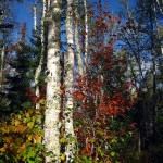 fall colors, Ely, MN Sept 2012