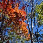 fall colors. Sept. 2012