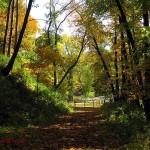 fall path, Effigy Mounds NM, IA Oct. 2011