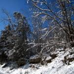 fresh snow, Elkader, Iowa. Feb. 2013