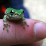 frog on finger. Jun 2011, IA
