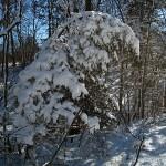 heavy snow on cedar. Elkader, IA Feb 2013