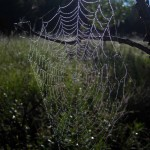 shining web in tree. Aug 2012