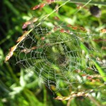 web in grass. Aug 2012