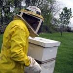 Beekeeper & hive