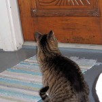 cat at ornate door