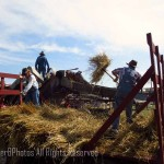 threshing crew 2