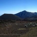 Hale'akala crater, silverswords