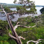 Juniper tree at Hanging Rock. Effigy Mounds NM, IA. May 2012
