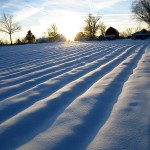 low sun on snowy furrows. Feb. 2013