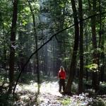 woodland sprite. IA, Aug 2012